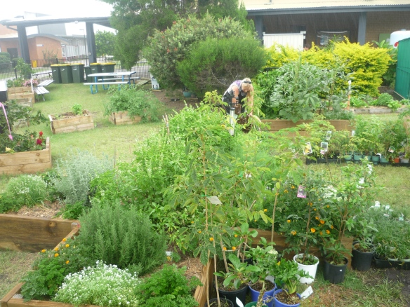 Dalveen at work in the Eugreenies' Community Garden